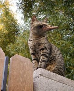 ostrio cat