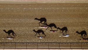 Al-Marmoun-Vertical-Race-Track,-Dubai,-UAE-by-Shoyab
